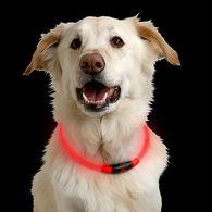NiteHowl LED Dog Safety Necklace, Red