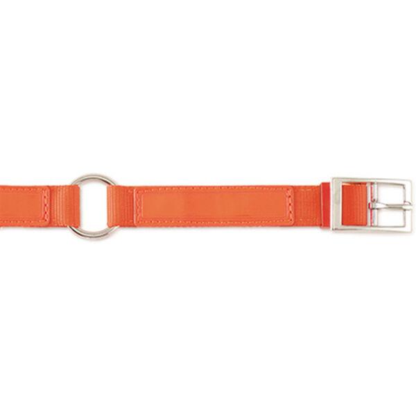 """Scott Pet Hot Orange Field Collar, 1""""W x 20""""L"""