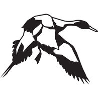 Pintail Vinyl Decal