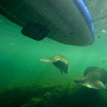 Aquaglide Chelan HB Tandem XL Inflatable Kayak
