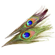 Superfly Peacock Eyes