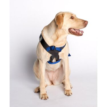 Blue Canine Travel Safe Harness, Small 2