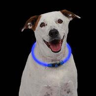 NiteHowl LED Dog Safety Necklace, Blue